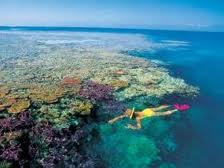 book lady elliott island snorkelling reef trip