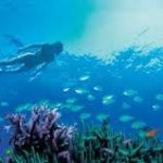 Stay at heron Island