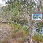 Copyright Kent Barton Art Gallery Agnes Water Australia In the Back Paddock