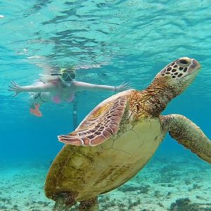 Jaimee snorkelling on the Southern great barrier reef
